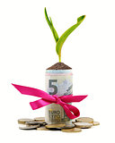 plant growing out of money roll isolated on white