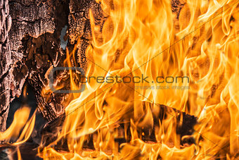 Flames in a wood burning fireplace
