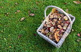Woven basket of fall leaves on grass