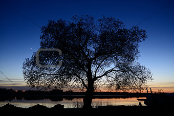 Alone tree on dusk background