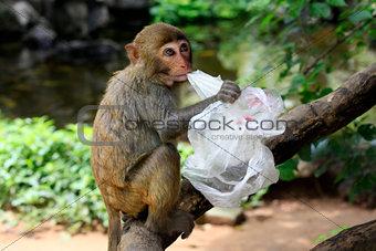 Portrait of the sad monkey