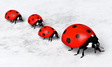 Ladybugs in a row