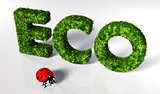 Ladybug with eco text