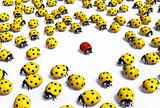 Red ladybug outnumbered