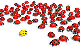 Outnumbered yellow ladybug