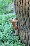 squirrel climbing up on the tree in the park
