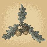 Acorn woodcut