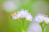 Crab spider in green nature