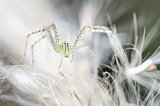 Spider in green nature background
