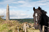 Irish horse and ancient round tower
