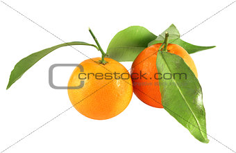 bright tasty tangerines