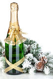Champagne bottle, christmas decor and fir tree