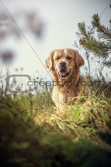 Labrador Outdoors