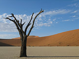 Dead tree , Sossusvlei