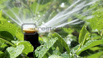 Automatic Garden Irrigation Spray system watering flowerbed