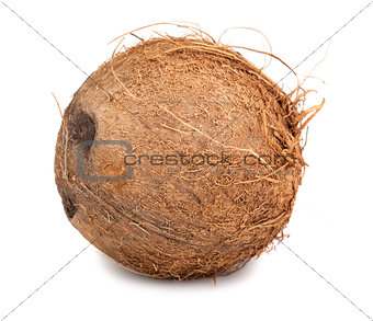 Single ripe coconut