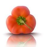 vector red bell pepper