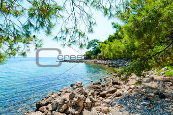 beautiful rocky shore and pine
