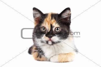 Kitten sits