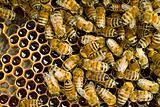 Bees inside  beehive