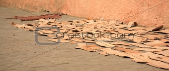 Pieces of leather drying