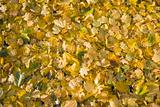 Golden Fall Leaves Background