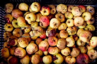 Aged apples in a package