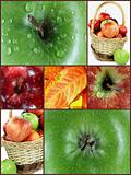 Photo collage fall apples.