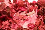 Potpourri Close-up