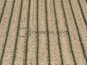 agriculture field background
