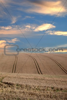 Crops under dramatic sky