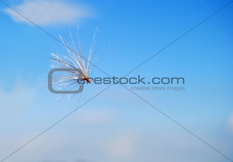 Floating thistle seed pod