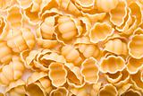 Sea Shell Pasta Background