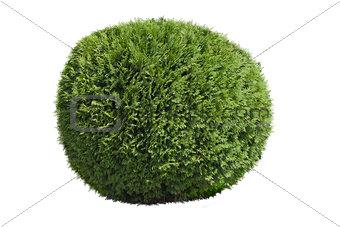 Topiary bush