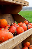 coclorful orange pumpkin in autumn outdoor