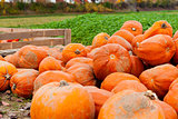 coclorful orange pumpkin in autumn outdoor