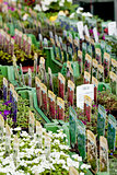flowers assortement crop seed garden market