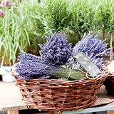 beautiful violet lavender bouquet in basket