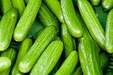fresh green cucumber on market macro