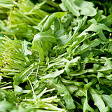 fresh green rucola salad on market macro