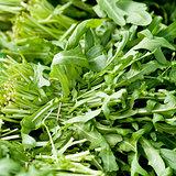 fresh green rucola salad on market macro