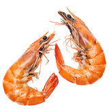 Shrimps isolated