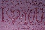 "Inscription ""I love you"""