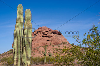 Arizona Desert Landscape Red Rocks with Cactus