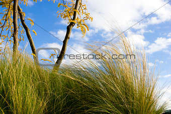Green Grass against Blue Sky in windy weather