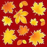 Collection autumn leaves