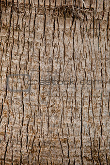 old palm tree texture