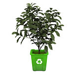 Tea plant in recycle bin