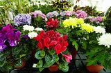Floral diversity