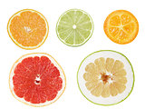 Set of cuts from citrus fruits